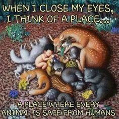 When I close my eyes . Animals And Pets, Baby Animals, Cute Animals, Animals Planet, Nature Animals, Amazing Animals, Animals Beautiful, Stop Animal Cruelty, Vegan Animals