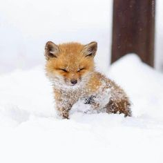 We have snow here in BC! Happy Friday to all of our foxy friends. #Repost @peta