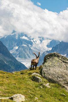 Découvrez le meilleur des Alpes à Chamonix Mont Blanc. #chamonix #alpes #montblanc #france