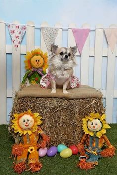 Puppy Easter photo