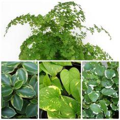 Plantes de terrarium
