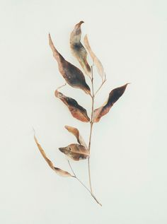 A selection of delicate photos by Brisbane, Australia-based Jared Fowler. More images below.            Jared Fowler on Behance Via: I Love Art