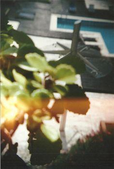 #analog #plant #pool
