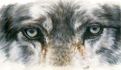 Eye-Catching Wolf Painting  - Eye-Catching Wolf Fine Art Print