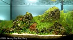 2006 AGA Aquascaping Contest - Entry #101