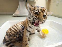 Didn't I tell you . . . I don't like baths