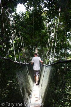Borneo, Kota Kinabalu Canopy Walks