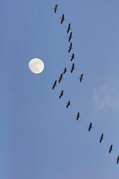 Kraanvogels van Corinne Welp