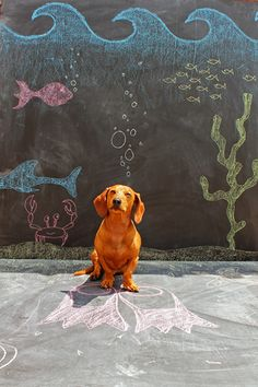 Imagination Hat - Ammo the Dachshund - Under the Sea - Chalkboard Art