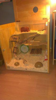 Hamster; gaiola; inspiração;