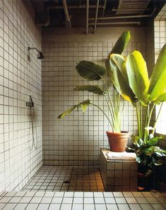 A plain shower room with a beautiful big plant :)