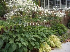 Hostas & Japanese Anemones. These plants practically dwarf the fence behind it, creating a layered feel that's been in the making for a few years. Tip: If you don't want a fence surrounding your entire house, consider adding a small section to the middle of an already established garden.