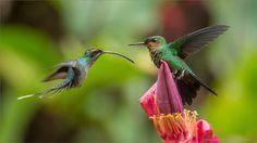 colibries para mi mami
