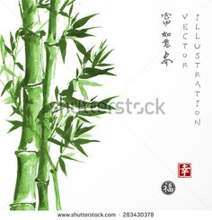 "Green bamboo hand drawn in traditional Japanese painting style sumi-e. Vector illustration. Contains hieroglyphs ""luck"", ""happiness"", ""wealth"", ""dreams come true"", ""spring"""