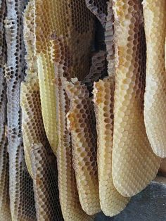 """Honeycomb - """"Last night, as I was sleeping,  I dreamt  that I had a beehive  here inside my heart.  And the golden bees  were making white combs  and sweet honey  from my past mistakes.""""  -Antonio Machado"""""""