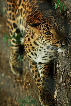 adventure ... love big cats ... and little cats too! <3 www.24kzone.com