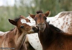 Baby Horse Kisses