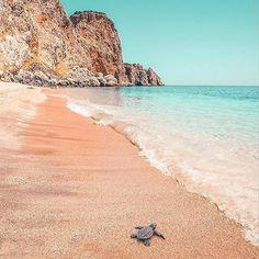 #sea #turtles #turkey #antalya #beach #sea #seaside #life #odessa #brugge #kiev #newyork #moscow #saintpetersburg #shimkent #astana #amsterdam #london #paris #almaty #bishkek #rome #madrid #sdney #miami #tokyo #lisboa #barcelona #venezia #milano