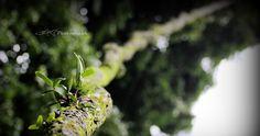 Akar pohon di Kebun Raya Bogor