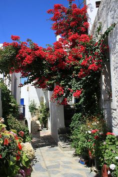 Here you relax with these backyard landscaping ideas and landscape design. Tinos Greece, Travel Around The World, Around The Worlds, Places To Travel, Places To Visit, Beautiful Flowers, Beautiful Places, Places In Greece, Virtual Travel