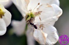 Makro-Blüte | FeenArt | Claudia Böttcher | DSC_6051WAFAFGk