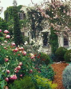 Wild, rambling English garden  http://afeatheradrift.wordpress.com