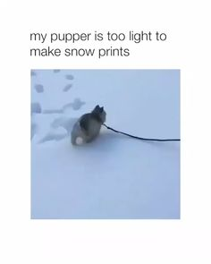 Funny Husky Memes That Will Keep You Laughing For Hours - Lovely Animals World Cute Funny Animals, Cute Baby Animals, Funny Cute, Funny Dogs, Animals And Pets, Cute Dog Memes, Funny Husky, Cute Puppies, Cute Dogs