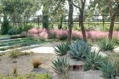 Gorgeous with Gulf muhly grass, agaves, a few flowering perennials, and a silver groundcover amid the gravel patio. Modern landscape - Austin - D-CRAIN Design and Construction