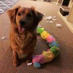 16 Dogs Who Are Best Friends With Their Stuffed Animals