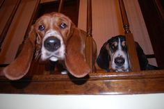 Mom, Dad, are you coming to bed...???