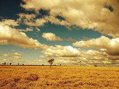 Winter Sunshine - Tambo QLD
