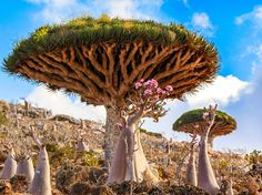 The flora of Socotra Island is on display in this National Geographic Photo of the Day.