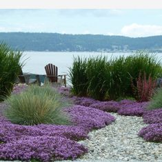 How beachy-beautiful are these rolling waves of red creeping thyme and Foerster's Feather Reed Grass? . No beach? This could be a perfect…
