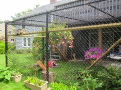Gatos que vivem dentro de casa tem várias vantagens sobre os que podem sair para as ruas. Os gatos que vivem sem ter acesso à rua vivem em ...