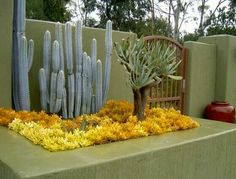 Definitely doing a bed of the yellow sedum with a blue fence post cactus or similar tint/shape art garden indoor plants Succulent Landscaping, Succulent Gardening, Backyard Landscaping, Landscaping Ideas, Succulents In Containers, Cacti And Succulents, Landscape Design, Garden Design, Dry Garden