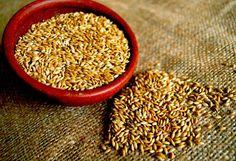 Propiedades de la semilla de Alpiste y cómo hacer una saludable leche para adelgazar.