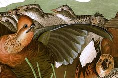 John James Audubons Birds of America - Plate 76 (Detail) - John James Audubon - Wikipedia