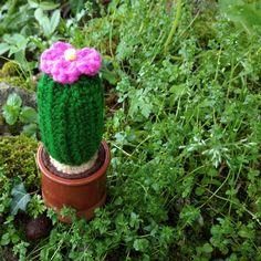 Cactus Plants, Amigurumi, Cacti