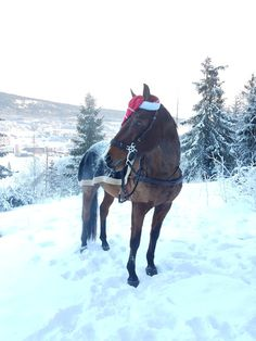 Horse in winter wonderland ready for christmas and santa. #christmas #winter