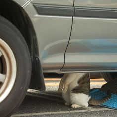 Why the engine is purring...