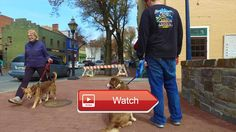 🐶 Aggressive Dog Training Australian Shepherd Dog TrainingOff Leash K Training MarylandDC Contact us for more information…