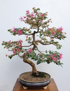 Florada de outono (Autumn Blossom)