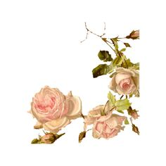 SHABBY ROSES ❤ liked on Polyvore featuring flowers, roses, backgrounds, pink and plants