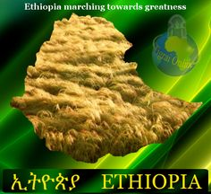 Famine is no longer synonymous with Ethiopia thanks to the awesome hard work of the EPRDF government led by the late Premier Meles Zenawi. Food production is now at an all time high owing to the introduction of modern farming technologies; water harvesting and irrigation; massive terracing & afforestations to prevent soil erosions.