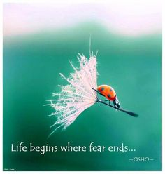 Life begins where fear ends.