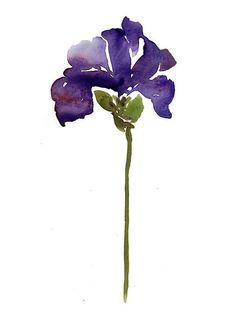 Royal Iris - watercolor painting, botanical art, minimalist, flower painting, purple, Iris, watercolor flower, a flower a day, art print
