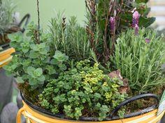 """Wir haben bereits viele Kräuter in unserem Verkauf.  Auf Instagram unter den Highligts findest du """"Kräuterkatalog 2019"""", hier kannst du mal durchblättern und dir überlegen, welche Kräuter bei dir zuhause nicht fehlen dürfen!  Wir kultivieren in unserer Gärtnerei 150 verschiedene Kräutersorten, hier wirst du bestimmt fündig! Frische Kräuter aus dem eigenen Garten werden immer beliebter!   #erlebnisgärtnerei #hödnerhof #ebbs #mils #hall #tirol #größtegärtnereitirol #ausflugsziel #erleben… Kraut, Around The Worlds, Innsbruck, Instagram, Plants, Botany, Lavender, Ad Home, Flora"""