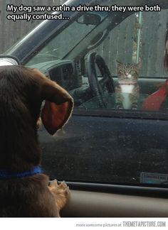 12 Adorably Awkward Dog Moments Caught On Camera