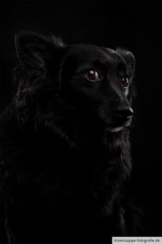 Portrait of a black dog by linsensuppe -  fotografie on 500px