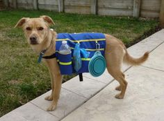 Dog Whisperer Dog Backpack Dogs love having jobs, and if they're ...